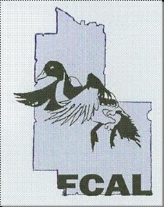 FCAL